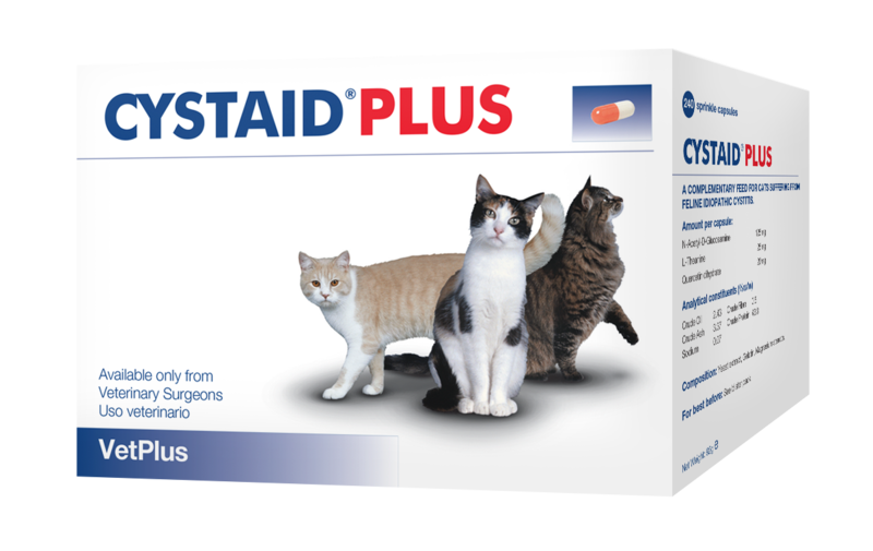 Cystitis in female cats